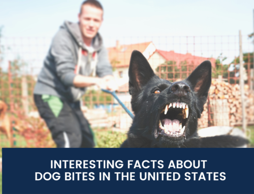 Interesting Facts About Dog Bites in The United States
